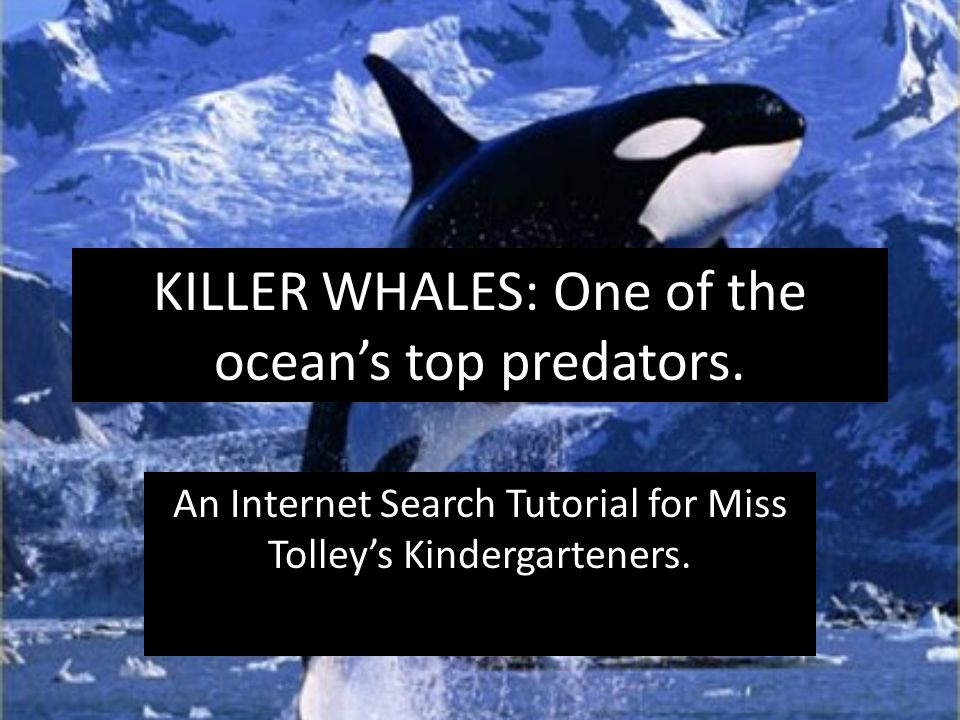 KILLER WHALES: One of the ocean's top predators. An Internet Search Tutorial for Miss Tolley's Kindergarteners.
