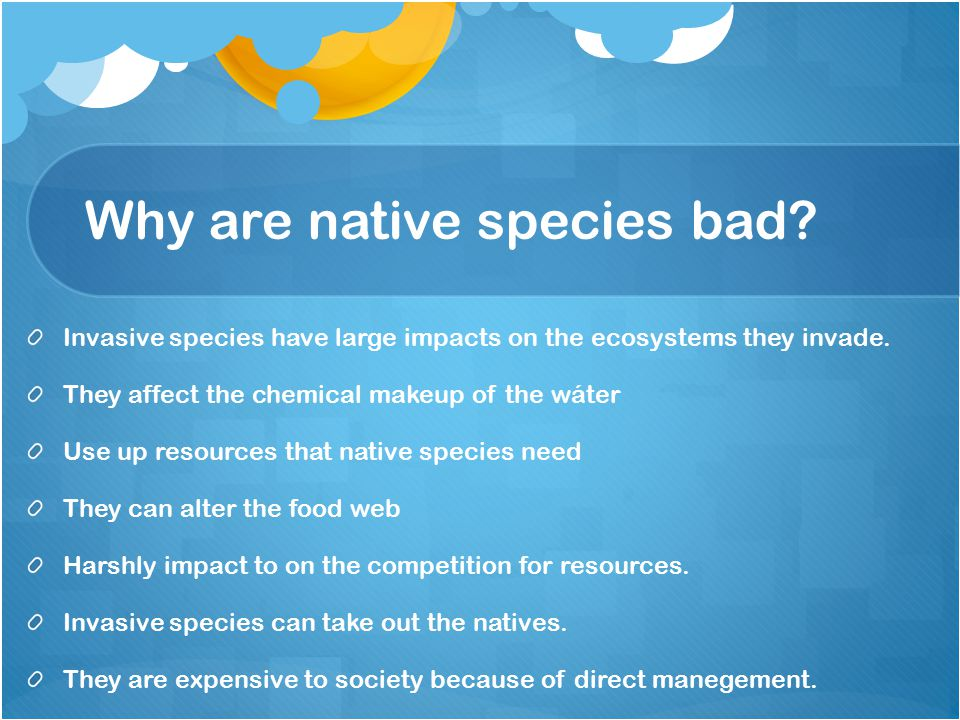 Why are native species bad. Invasive species have large impacts on the ecosystems they invade.