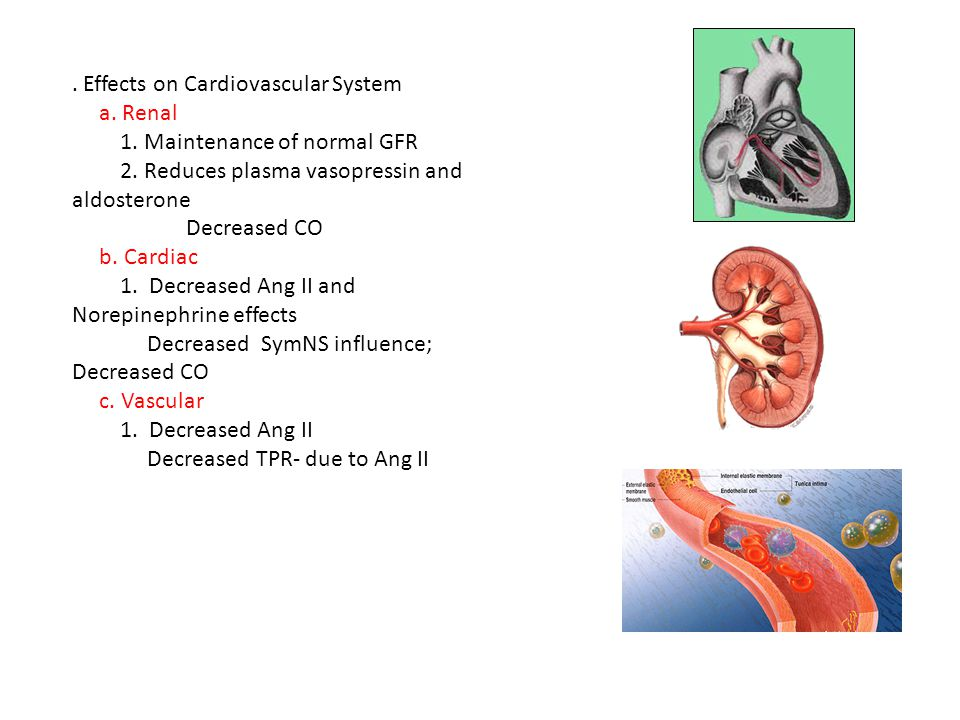 Effects on Cardiovascular System a. Renal 1. Maintenance of normal GFR 2.
