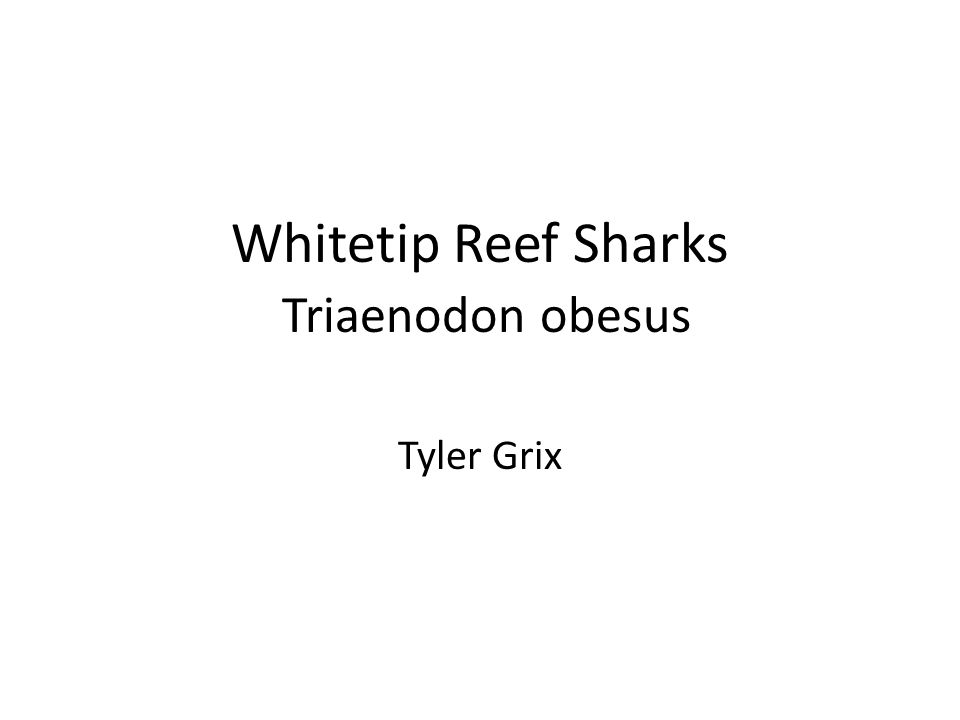 The whitetip reef shark feeds during the night on benthic prey.