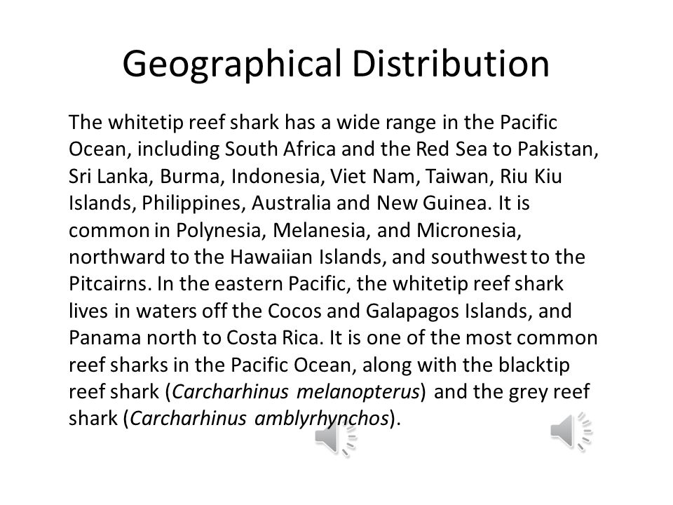 Geographical Distribution The whitetip reef shark has a wide range in the Pacific Ocean, including South Africa and the Red Sea to Pakistan, Sri Lanka, Burma, Indonesia, Viet Nam, Taiwan, Riu Kiu Islands, Philippines, Australia and New Guinea.