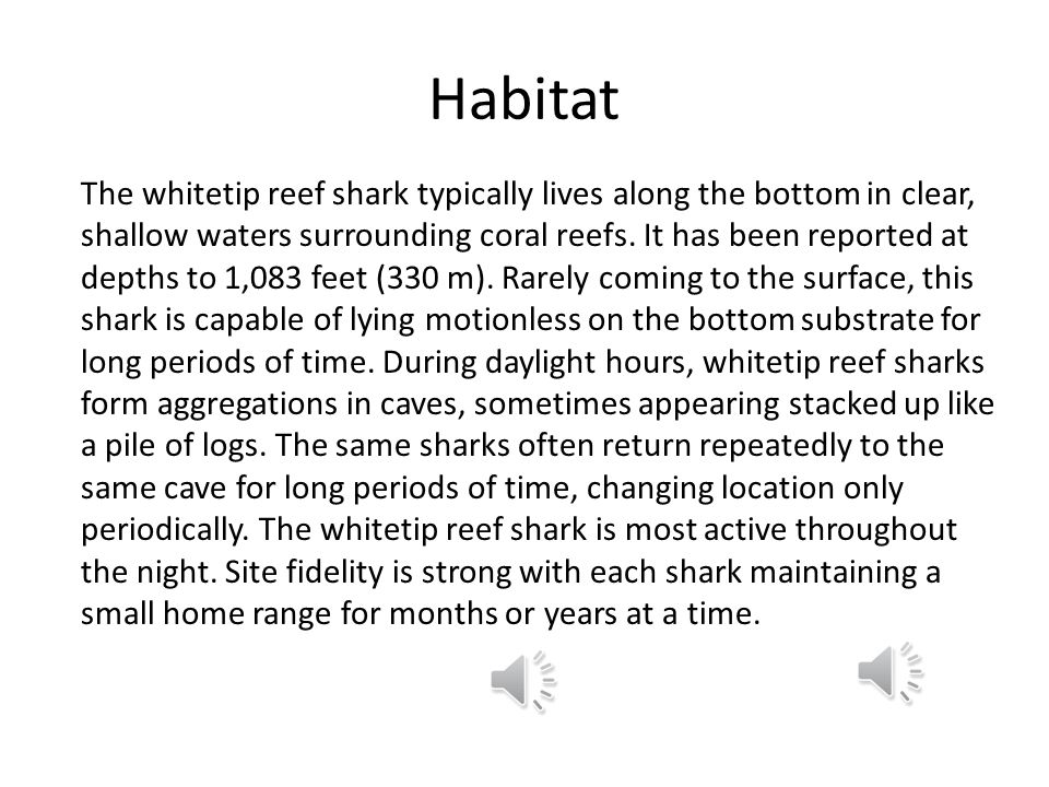 Habitat The whitetip reef shark typically lives along the bottom in clear, shallow waters surrounding coral reefs.