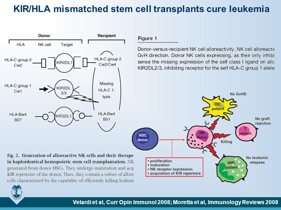 KIR/HLA mismatched stem cell transplants cure leukemia Velardi et al, Curr Opin Immunol 2008; Moretta et al, Immunology Reviews 2008