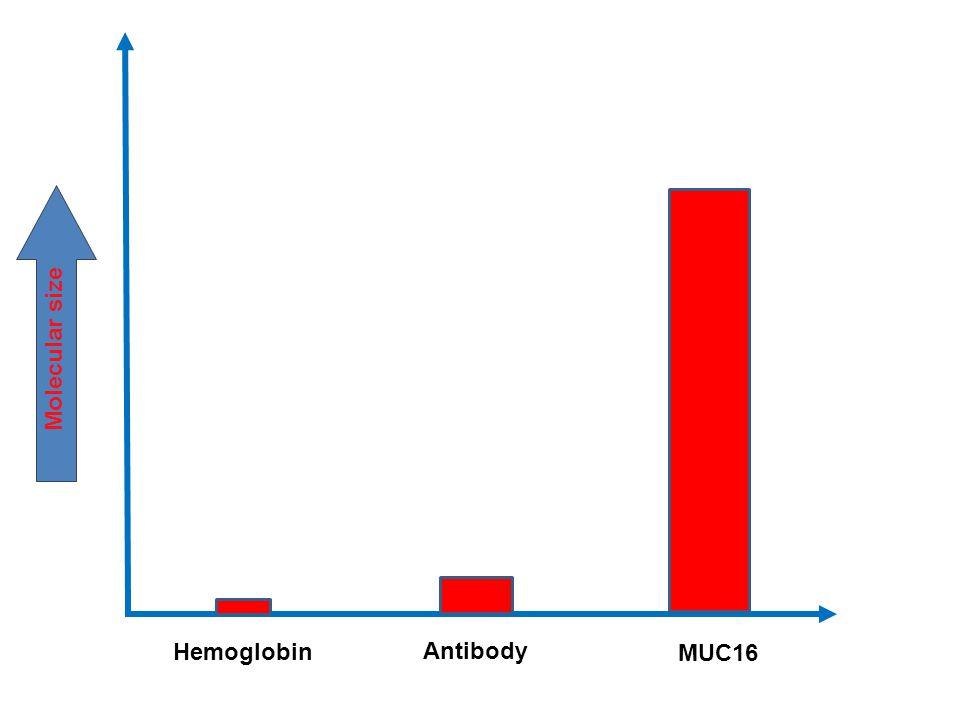 Molecular size Hemoglobin Antibody MUC16