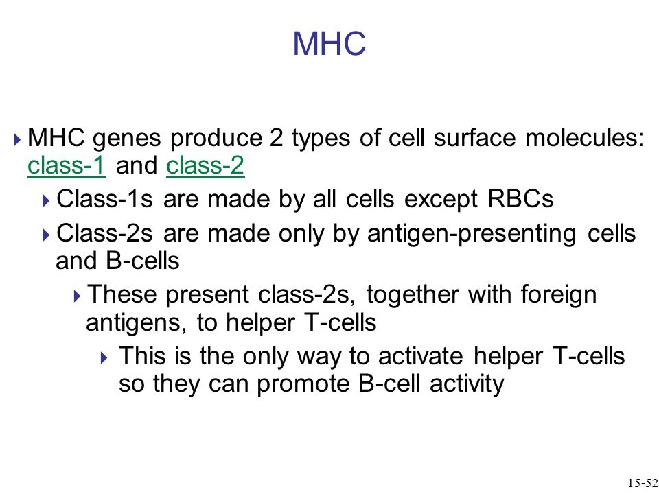  MHC genes produce 2 types of cell surface molecules: class-1 and class-2  Class-1s are made by all cells except RBCs  Class-2s are made only by antigen-presenting cells and B-cells  These present class-2s, together with foreign antigens, to helper T-cells  This is the only way to activate helper T-cells so they can promote B-cell activity MHC 15-52