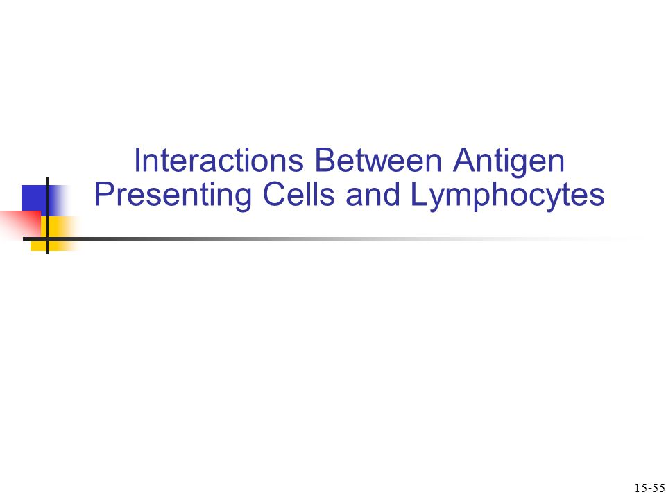 Interactions Between Antigen Presenting Cells and Lymphocytes 15-55