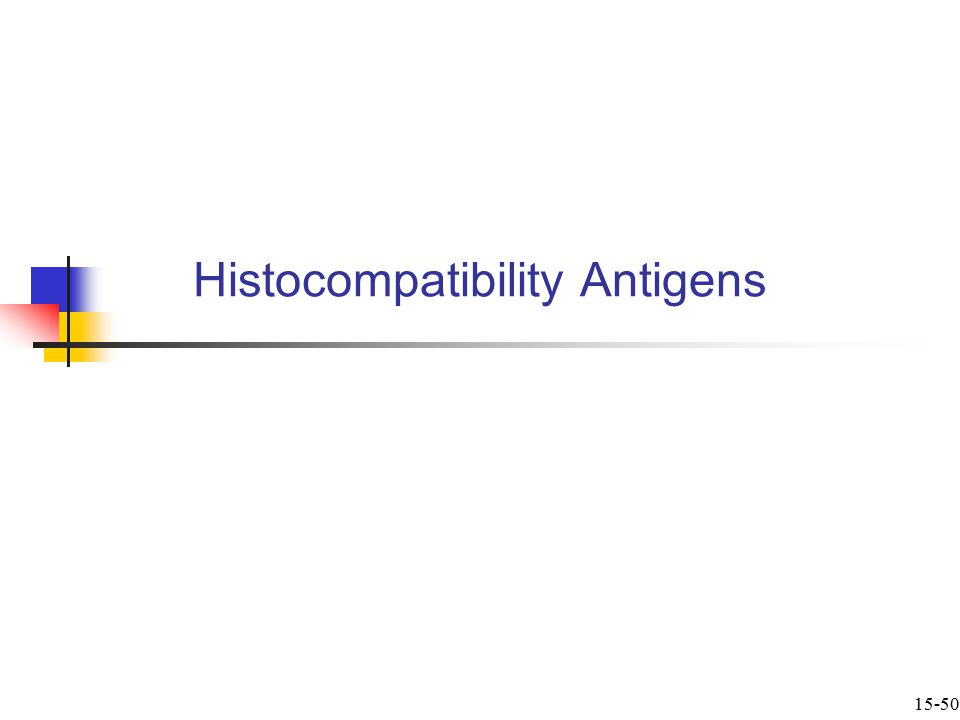 Histocompatibility Antigens  Are on surface of all body s cells except mature RBCs  Also called human leukocyte antigens (HLAs)  Are coded for by group of 4 genes on chromosome 6 called the major histocompatibility complex (MHC)  The 4 genes have multiple alleles creating many possible MHC types 15-51