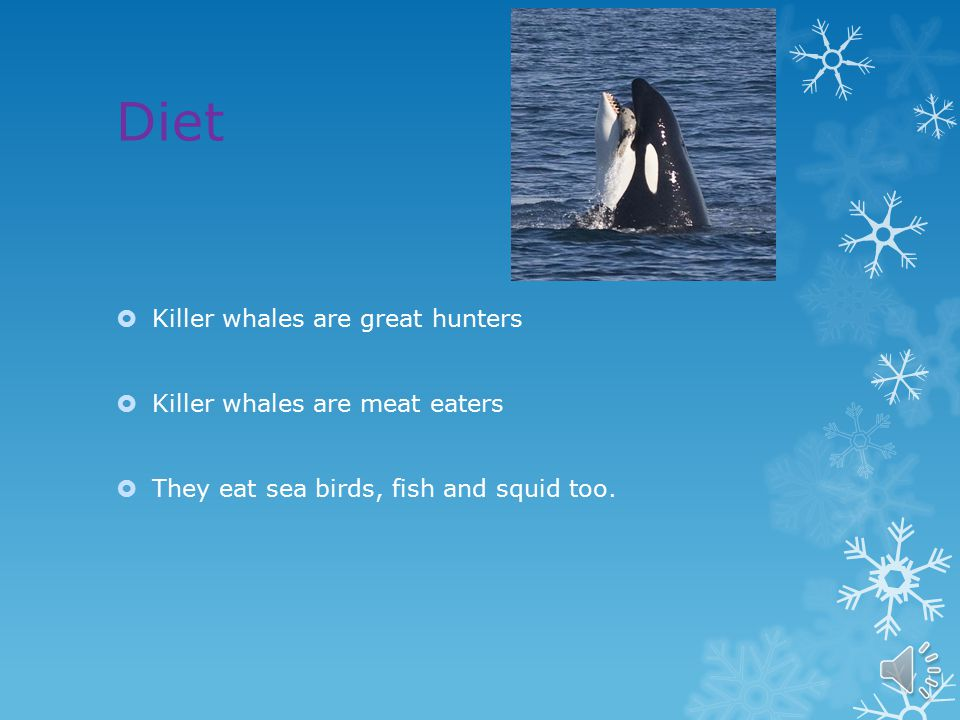 Habitat  They usually live where the water is cold but they can live anywhere from the polar regions to the equator.  Most of them can be found in t