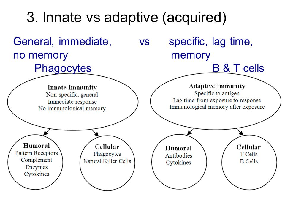 3. Innate vs adaptive (acquired) General, immediate, vs specific, lag time, no memory memory PhagocytesB & T cells