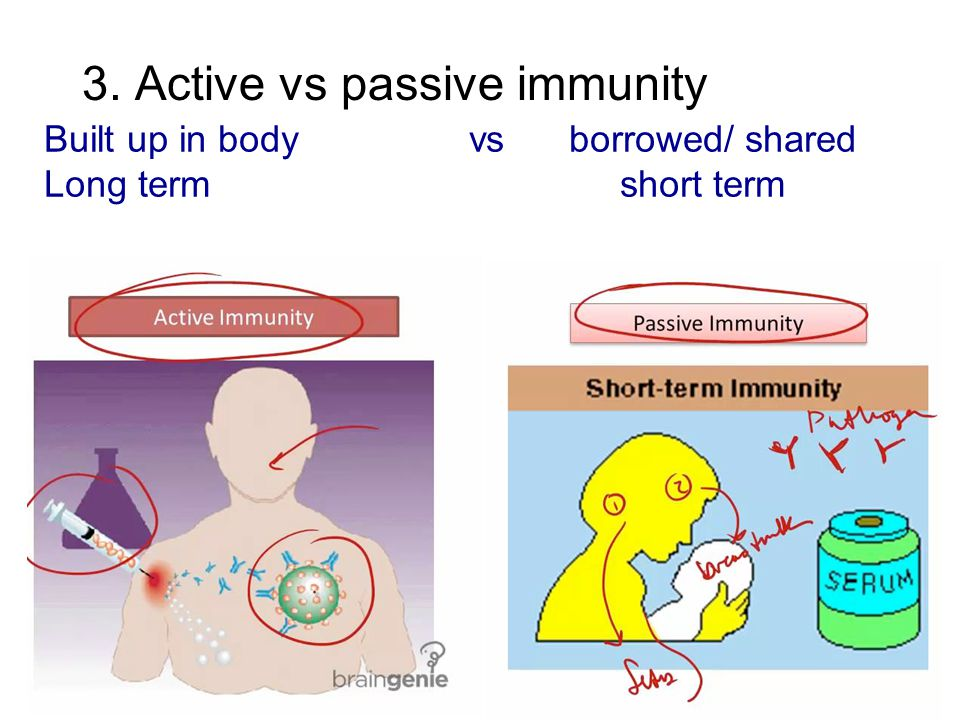 3. Active vs passive immunity Built up in body vs borrowed/ shared Long term short term