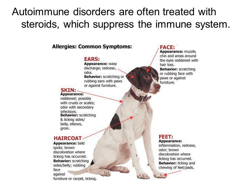 Autoimmune disorders are often treated with steroids, which suppress the immune system.