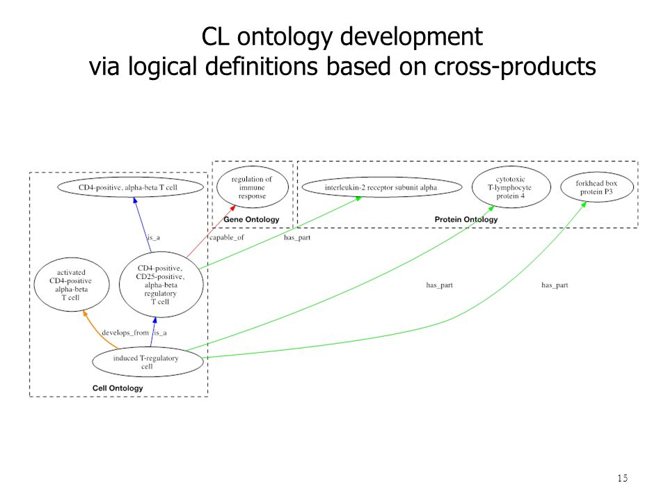 15 CL ontology development via logical definitions based on cross-products
