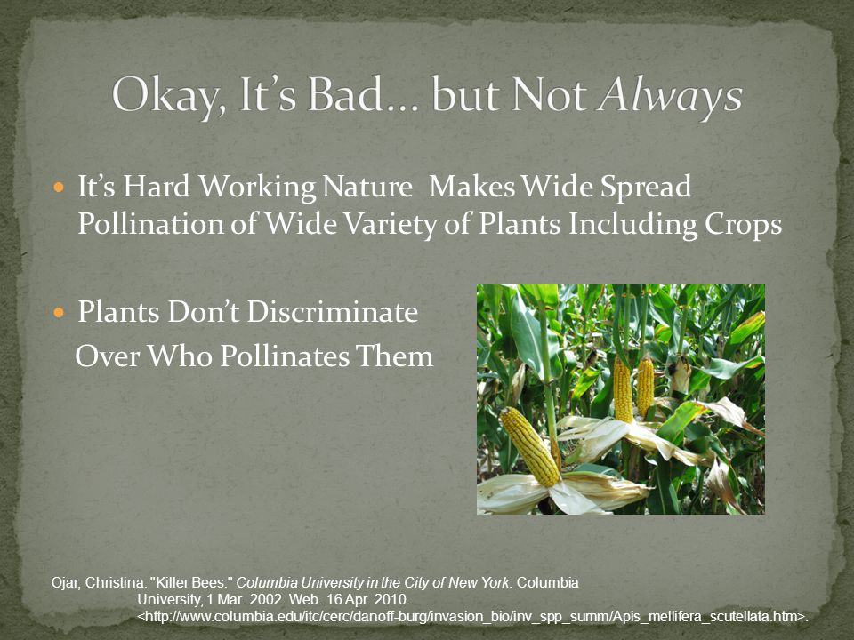 It's Hard Working Nature Makes Wide Spread Pollination of Wide Variety of Plants Including Crops Plants Don't Discriminate Over Who Pollinates Them Ojar, Christina.