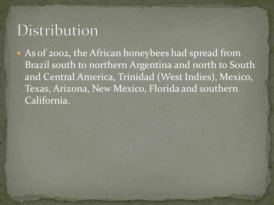 As of 2002, the African honeybees had spread from Brazil south to northern Argentina and north to South and Central America, Trinidad (West Indies), Mexico, Texas, Arizona, New Mexico, Florida and southern California.