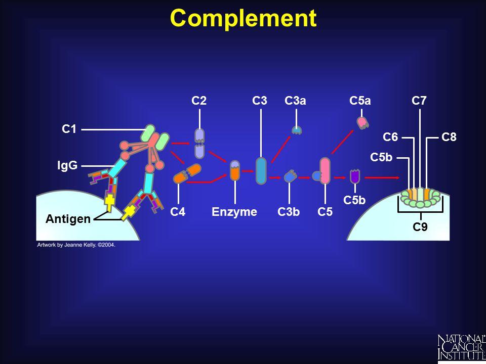 Complement C9 Enzyme C2 C5C3b C3aC3 C4 Antigen IgG C1 C8 C7 C6 C5b C5a