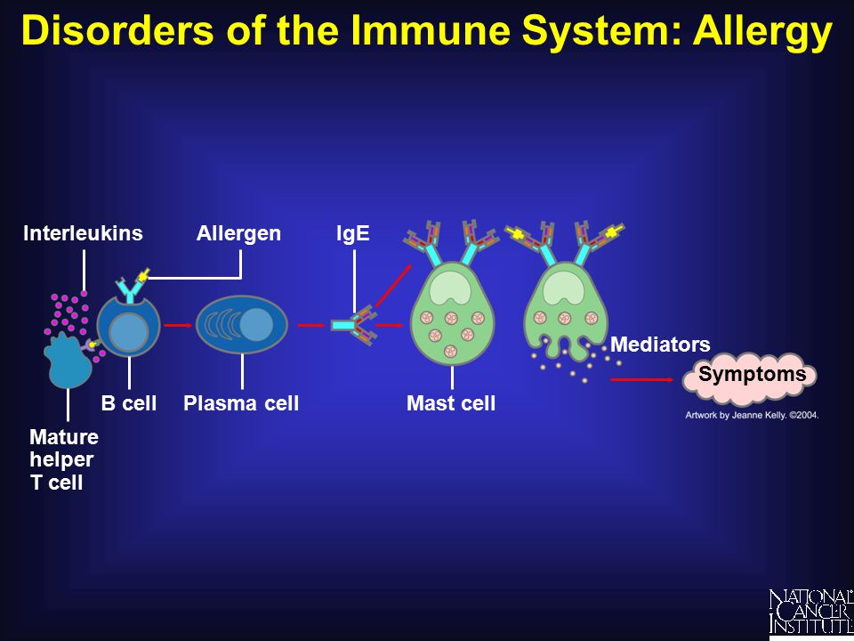 Disorders of the Immune System: Allergy Plasma cell Interleukins Mature helper T cell B cell IgEAllergen Symptoms Mediators Mast cell