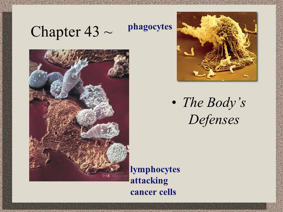 How do T cells know a cell is infected.