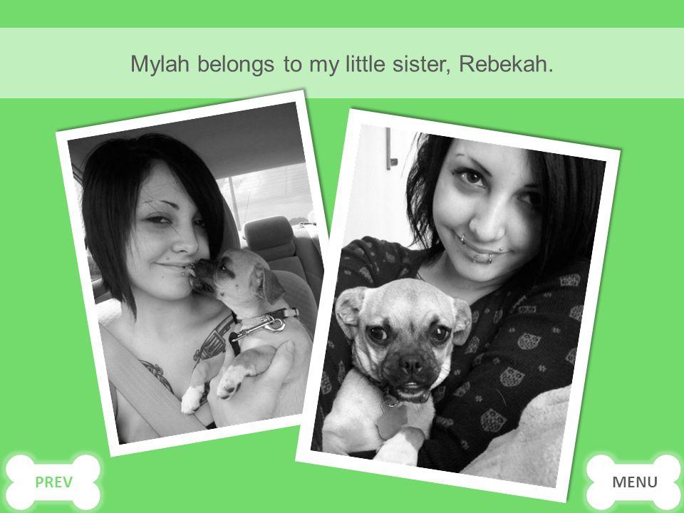 Mylah belongs to my little sister, Rebekah. MENU PREV