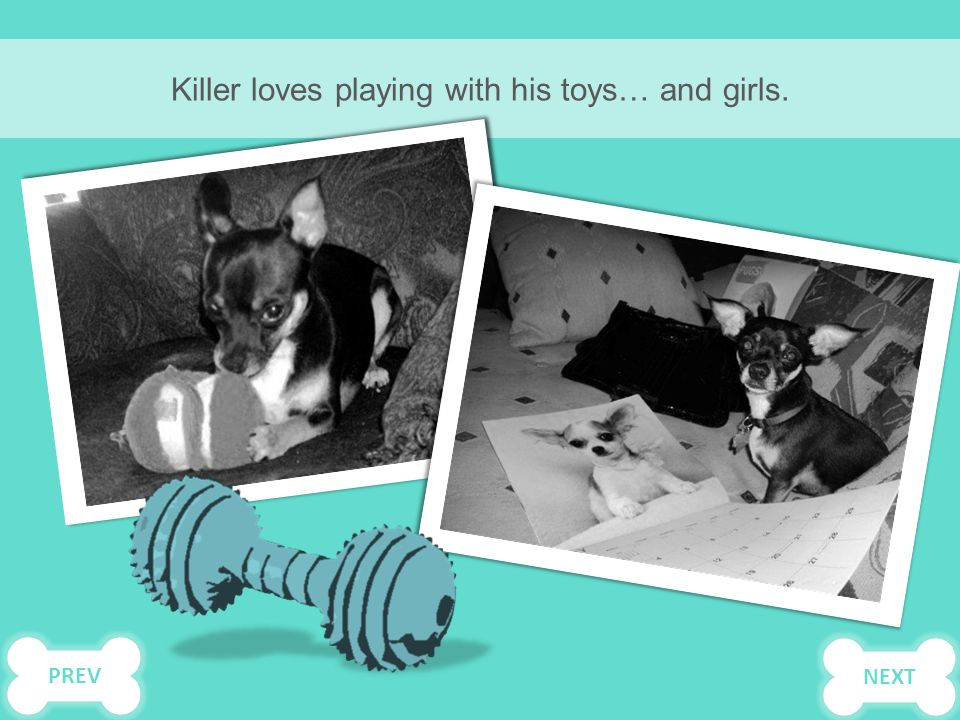 Killer loves playing with his toys… and girls. NEXTPREV