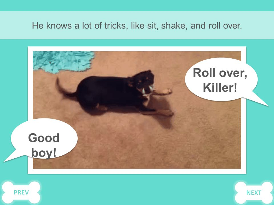 He knows a lot of tricks, like sit, shake, and roll over. Roll over, Killer! Good boy! NEXTPREV