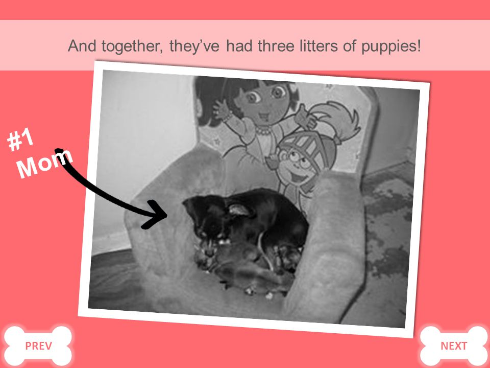 And together, they've had three litters of puppies! #1 Mom PREV NEXT