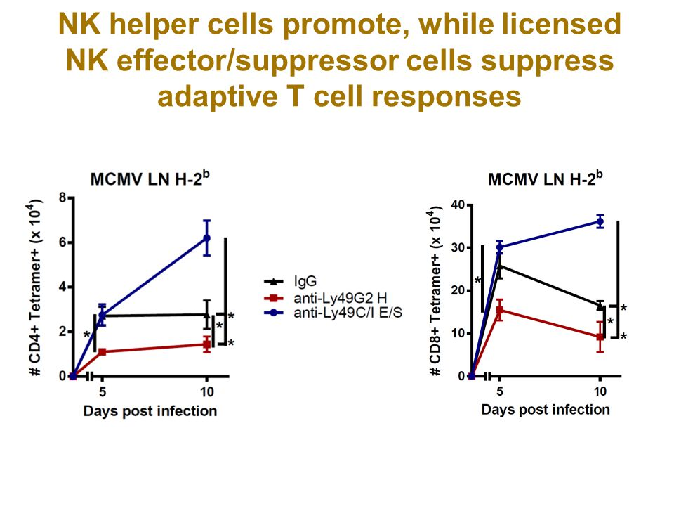 NK helper cells promote, while licensed NK effector/suppressor cells suppress adaptive T cell responses