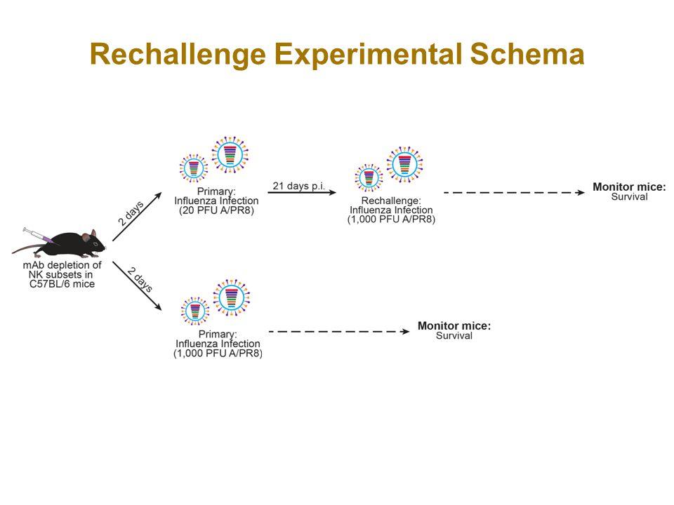 Rechallenge Experimental Schema