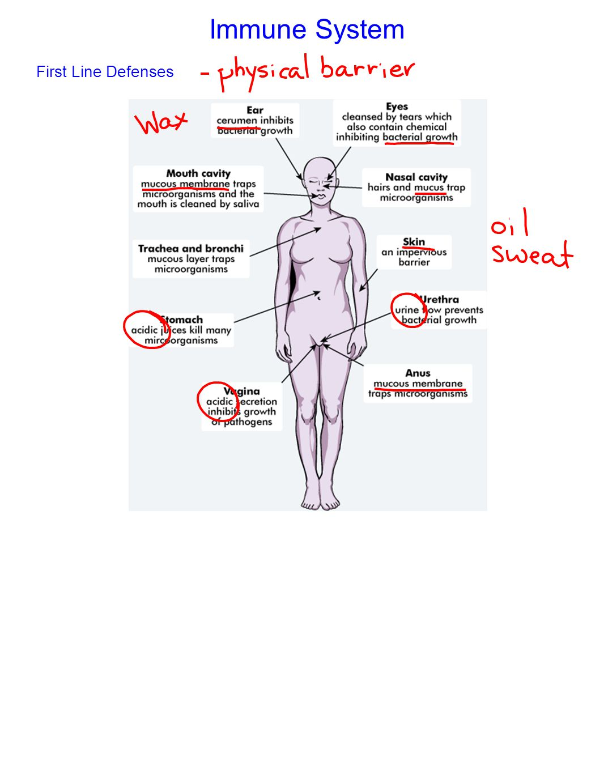 Immune System First Line Defenses