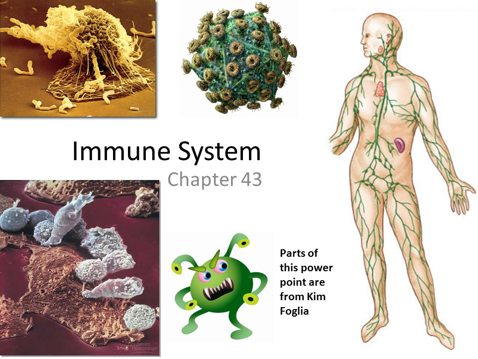Immune System Chapter 43 Parts of this power point are from Kim Foglia