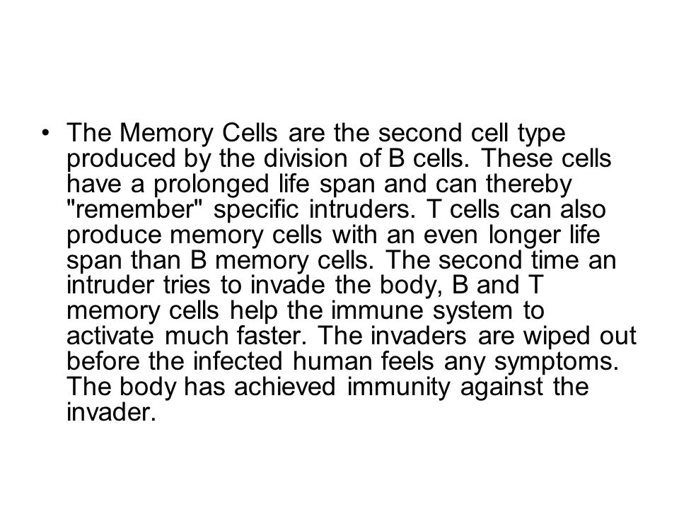 The Memory Cells are the second cell type produced by the division of B cells.