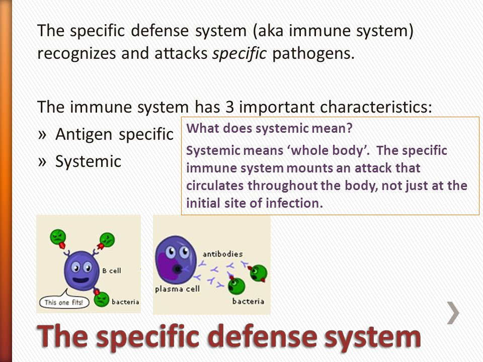 The specific defense system (aka immune system) recognizes and attacks specific pathogens.