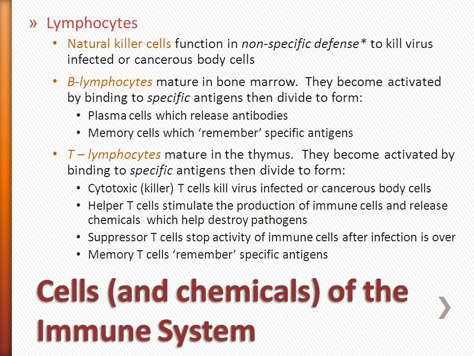 » Lymphocyte quick review What do the B and T refer to.