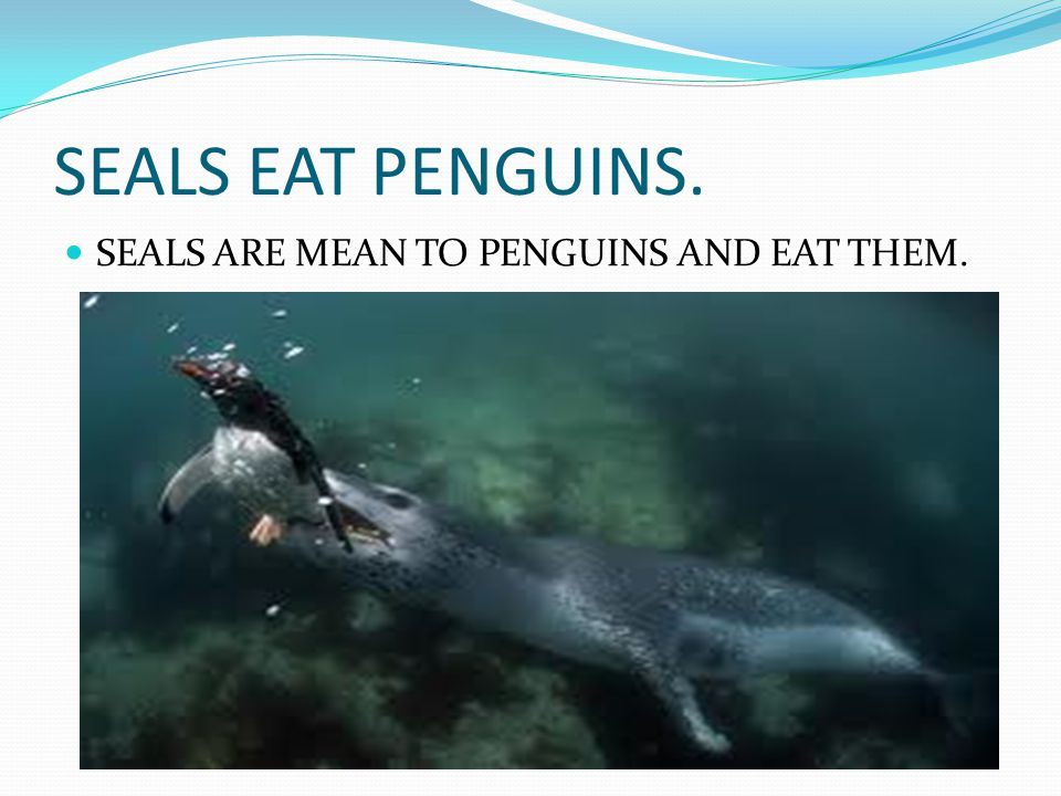 Penguins don't fly Penguins don t fly even though they have wings they use them to swim.