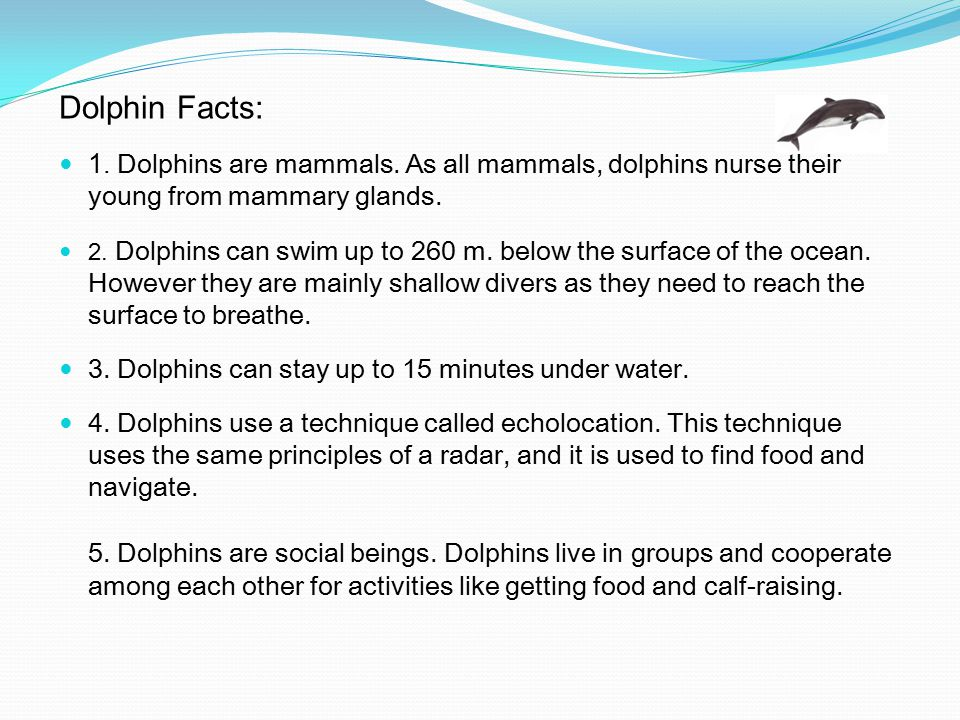 Dolphin Facts: 1. Dolphins are mammals. As all mammals, dolphins nurse their young from mammary glands. 2. Dolphins can swim up to 260 m. below the su