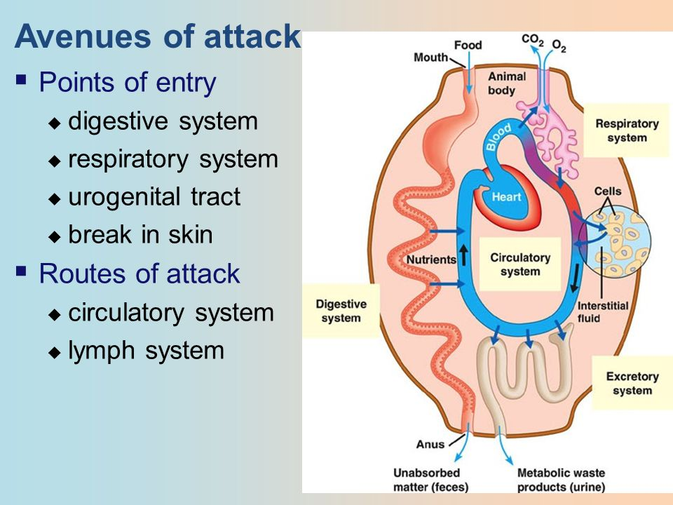 Avenues of attack  Points of entry  digestive system  respiratory system  urogenital tract  break in skin  Routes of attack  circulatory system  lymph system