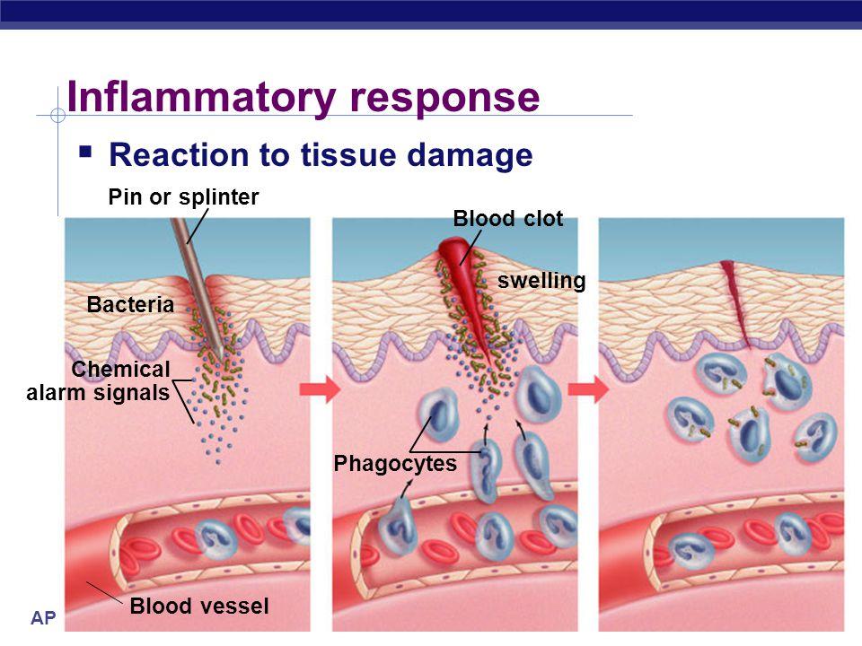 AP Biology Inflammatory response  Damage to tissue triggers local non-specific inflammatory response  release histamines & prostaglandins  capillar