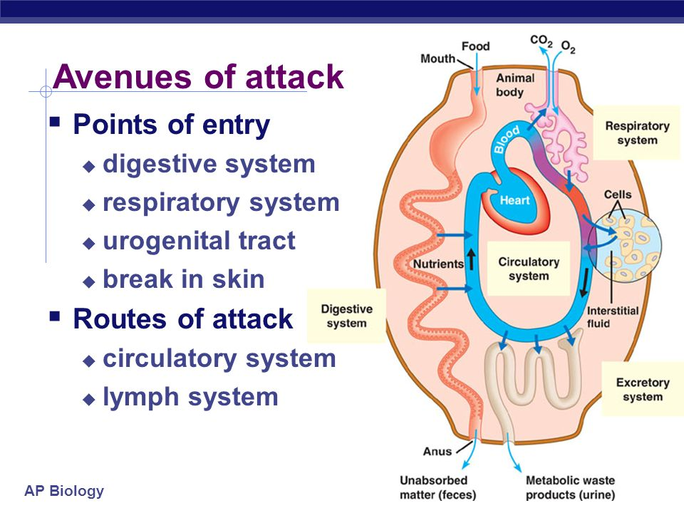 AP Biology Avenues of attack  Points of entry  digestive system  respiratory system  urogenital tract  break in skin  Routes of attack  circulatory system  lymph system