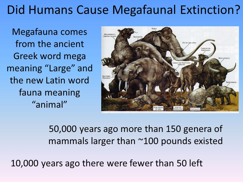 10,000 years ago there were fewer than 50 left 50,000 years ago more than 150 genera of mammals larger than ~100 pounds existed Megafauna comes from the ancient Greek word mega meaning Large and the new Latin word fauna meaning animal Did Humans Cause Megafaunal Extinction