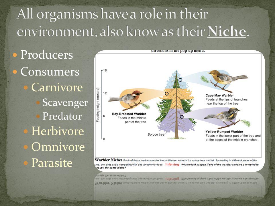 Producers Consumers Carnivore Scavenger Predator Herbivore Omnivore Parasite