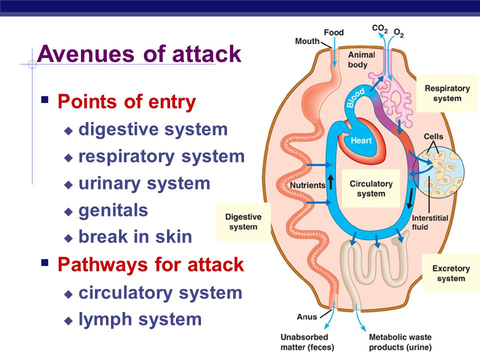 2006-2007 Fighting the Enemy Within Immune System lymphocytes attacking cancer cell phagocytic leukocyte lymph system