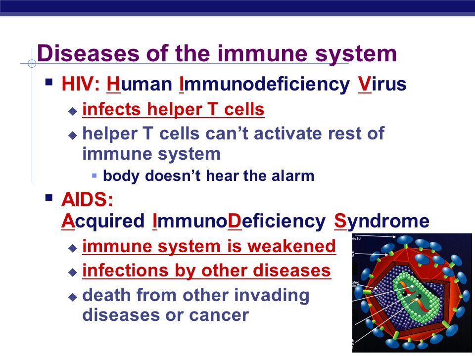 Immune response invader invaders in bloodinvaders infect cells B cellsT cells macrophages helper T cells patrolling B cells memory B cells memory T ce