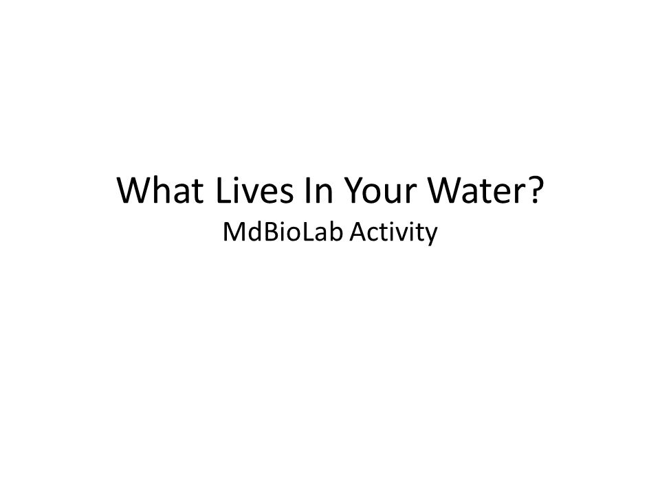 What Lives In Your Water? MdBioLab Activity