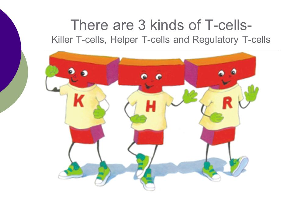 There are 3 kinds of T-cells- Killer T-cells, Helper T-cells and Regulatory T-cells