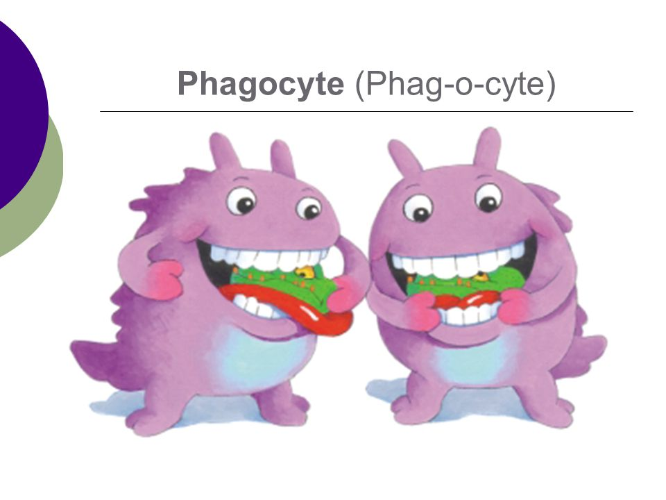 Phagocyte (Phag-o-cyte)