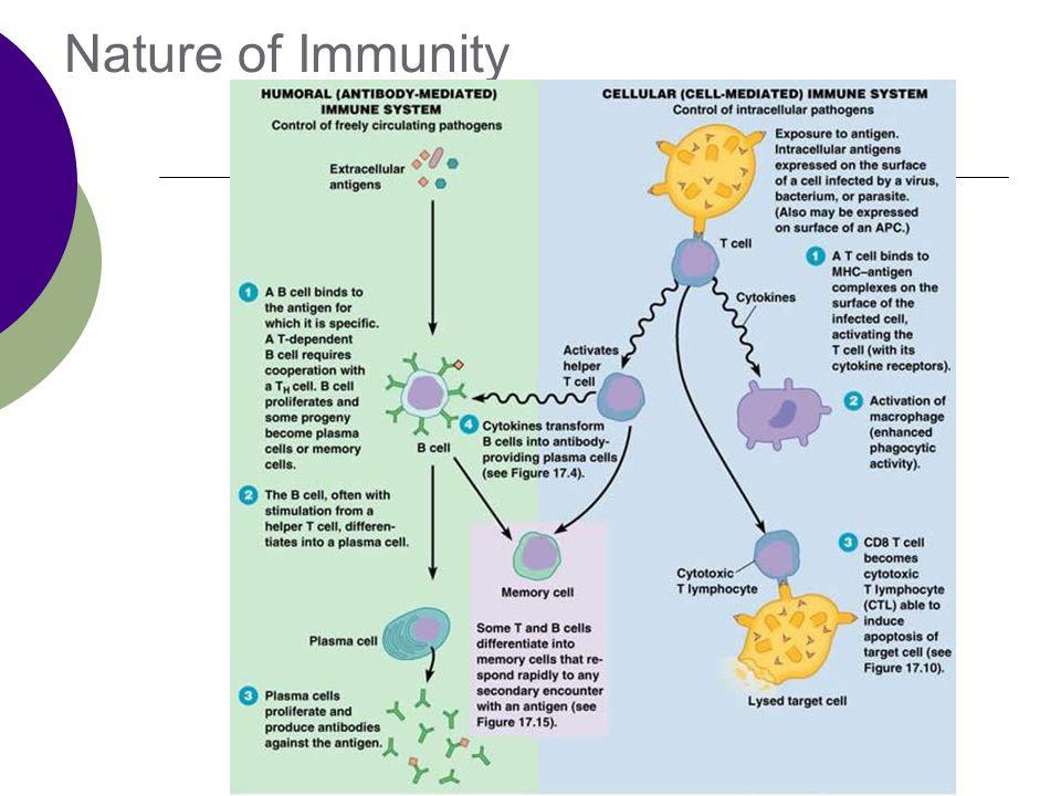 Nature of Immunity