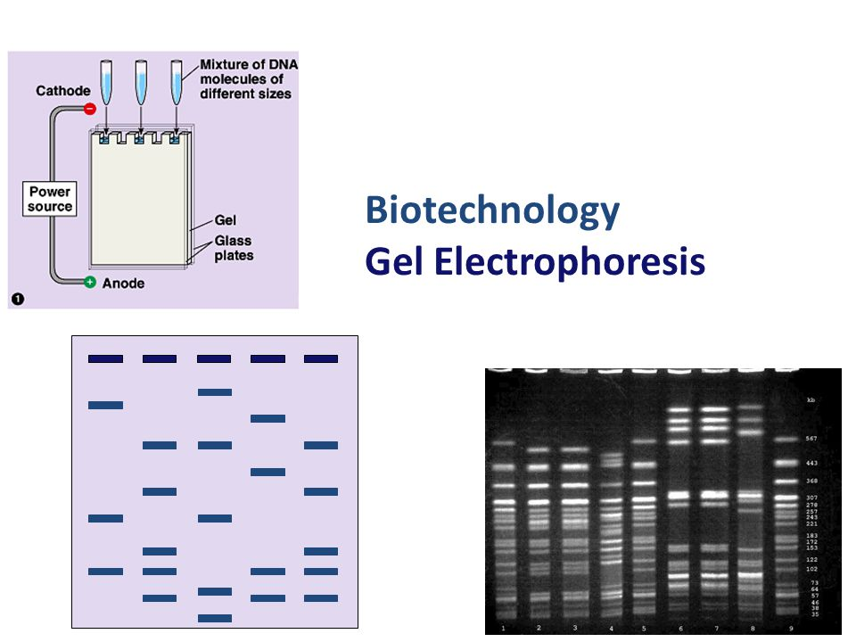 2006-2007 Biotechnology Gel Electrophoresis