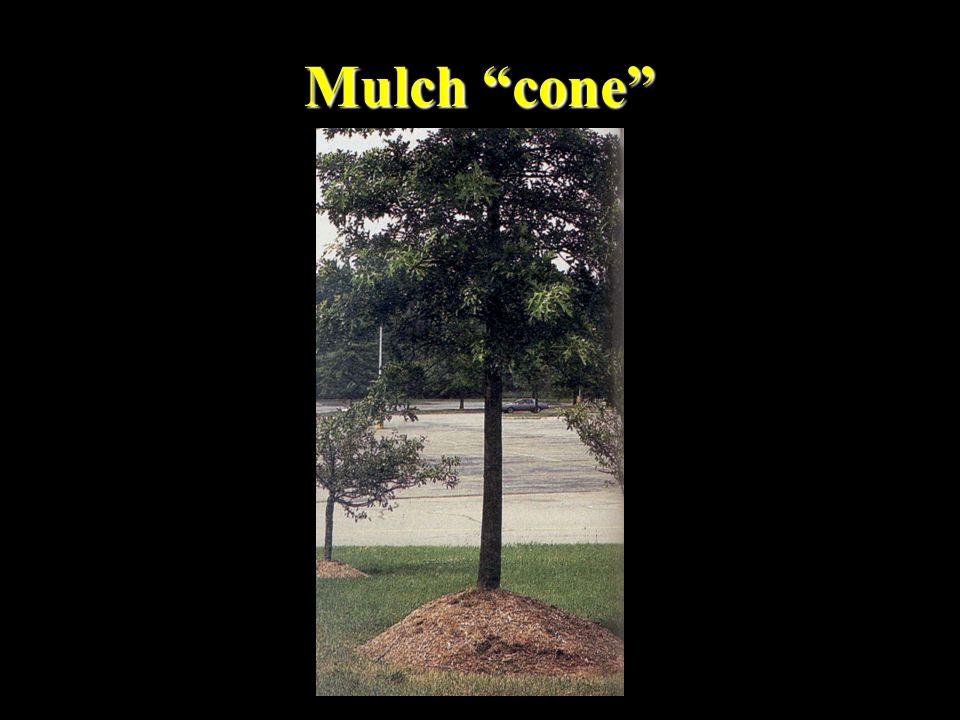 """Mulch """"cone"""""""