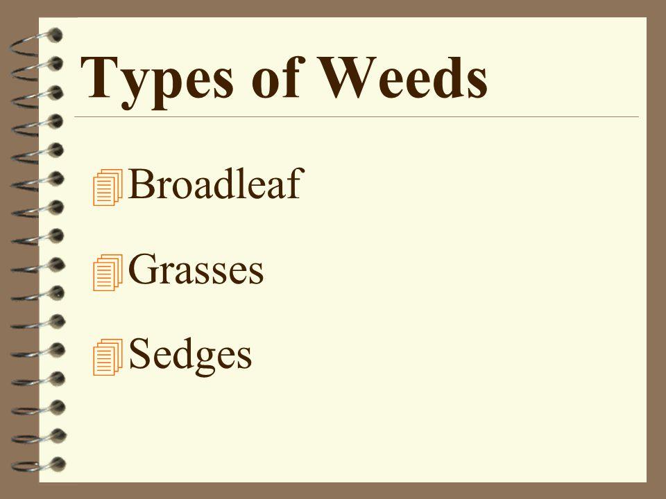 Types of Weeds 4 Broadleaf 4 Grasses 4 Sedges