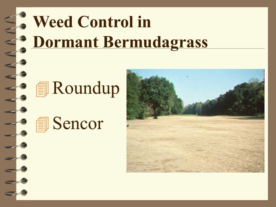 Weed Control in Dormant Bermudagrass 4 Roundup 4 Sencor