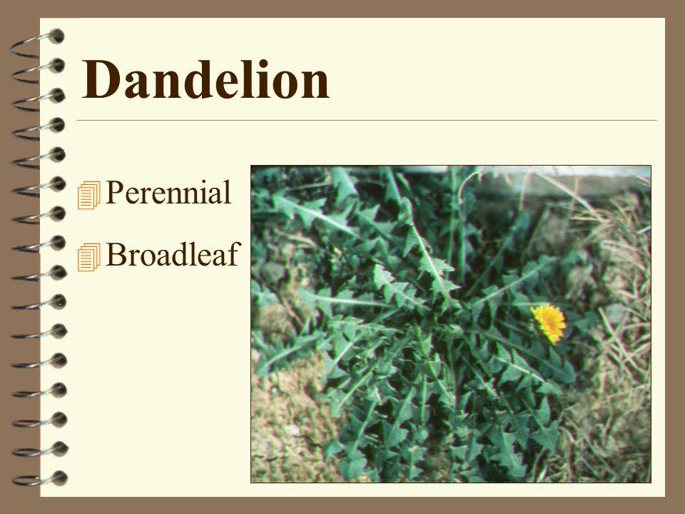 Postemergence Broadleaf Weed Control 4 2,4-D AmineDacamine 4D Weedar 64 4 MCPPOrtho Chickweed & Clover Killer 4 DicambaBanvel